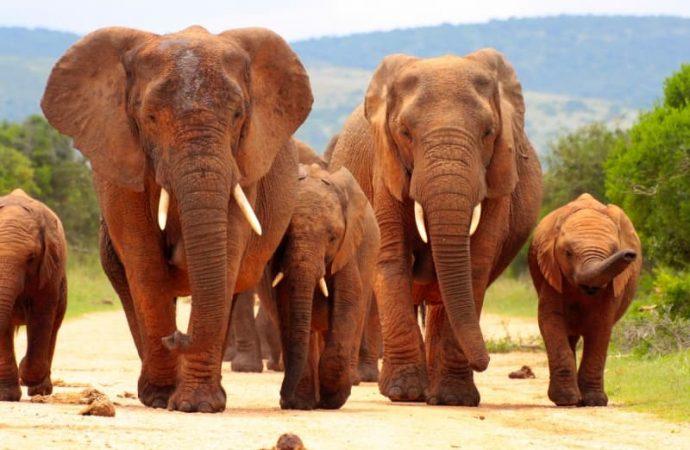 Les essentiels à emmener avec soi lors d'un voyage au Kenya
