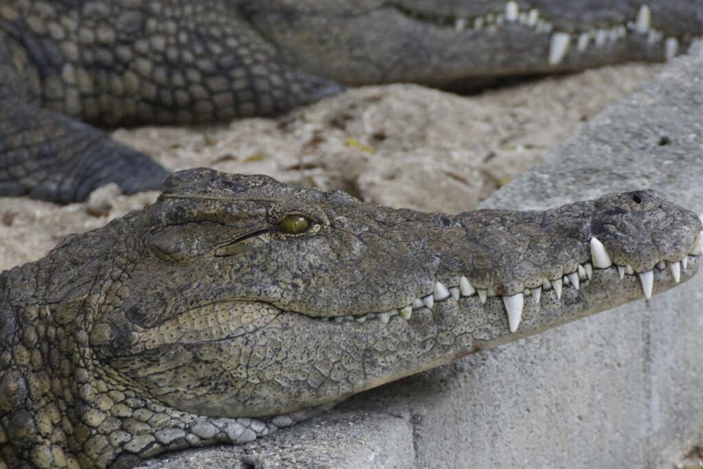 La Vanille Crocodile Park