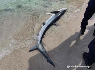 Où vit le requin bleu ?